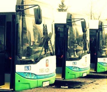 autobusy_www